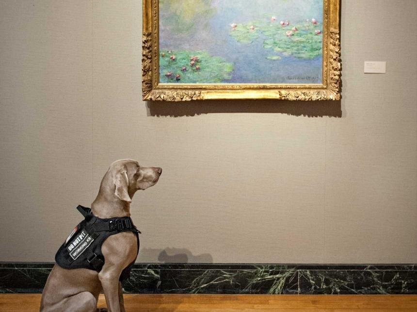 Riley, a bostoni múzeum kutyája