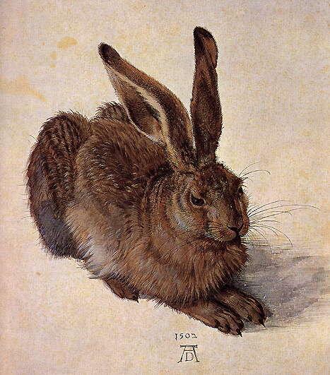 Albrecht Dürer: Mezei nyúl - 1502