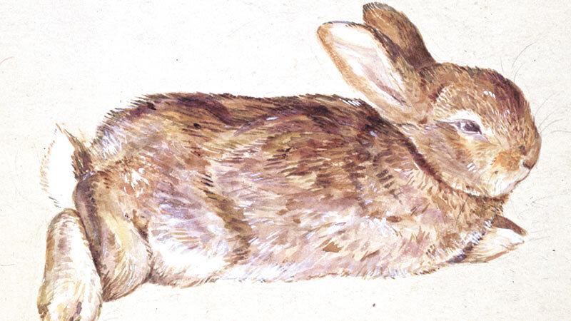 Beatrix Potter rajza nyuszijáról, Peterről - forrás: peterrabbit.com