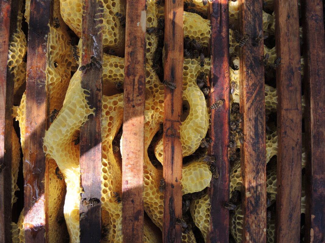 Au műhely_ architecture uncomfortable workshop: Egyedüllét méhekkel (látványterv), 2021 A művészek jóvoltából