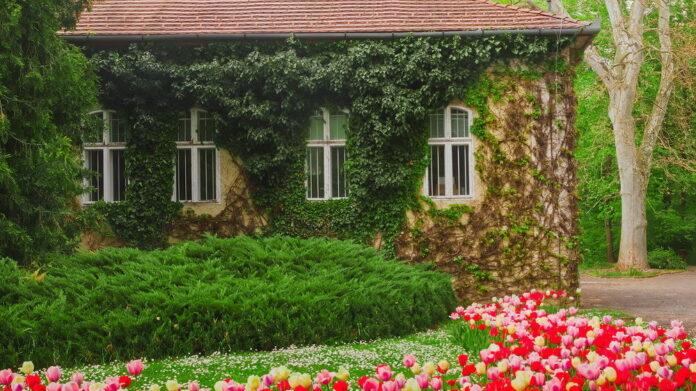 Vácrátóti botanikus kert - forrás: az intézmény honlapja