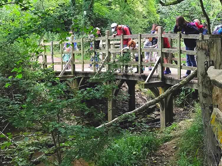Micimackó hídja - forrás: poohscorner
